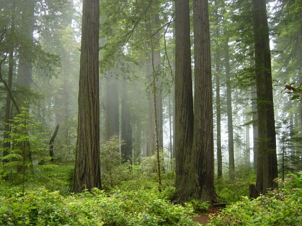 wood_National_forest