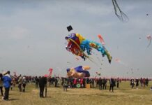 kites fly
