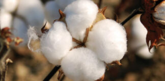 importance of cotton