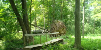 brook-trail