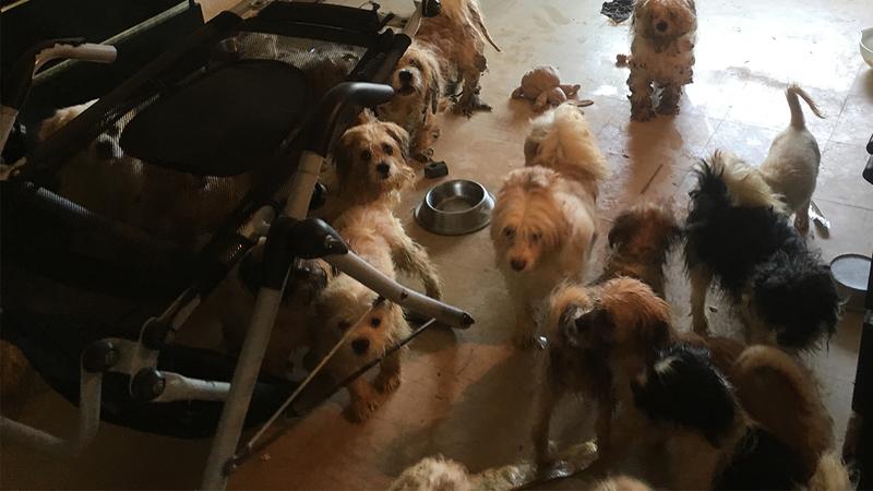 dog_malnourished