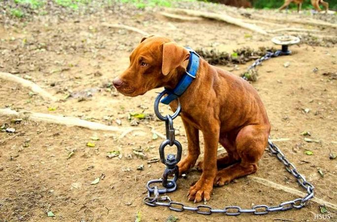 chaineddog